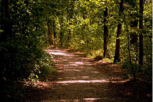 Trusting the Path