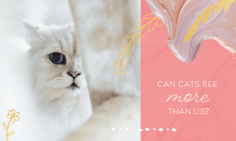 Can Cats See More Than Us?